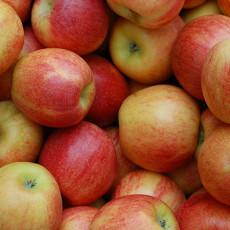 Dinkel-Griesbrei mit Apfelmus