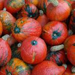 Vegetarischer Süßkartoffel-Kürbis-Brei