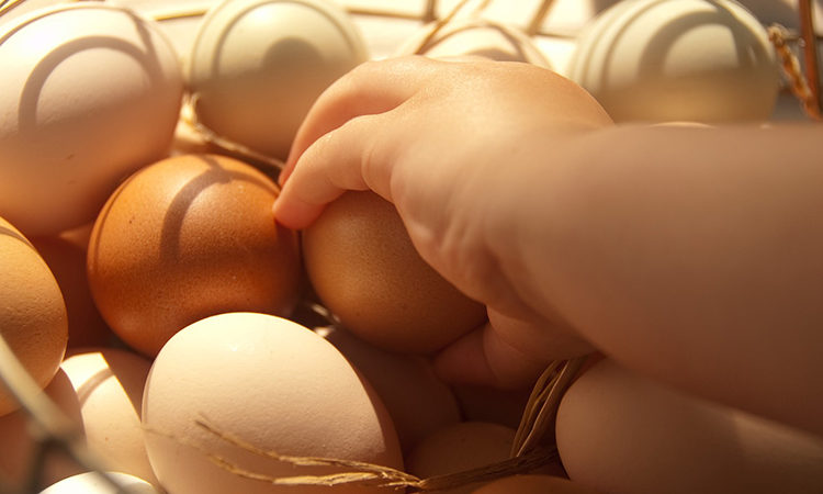 Ab wann darf mein Baby Eier essen